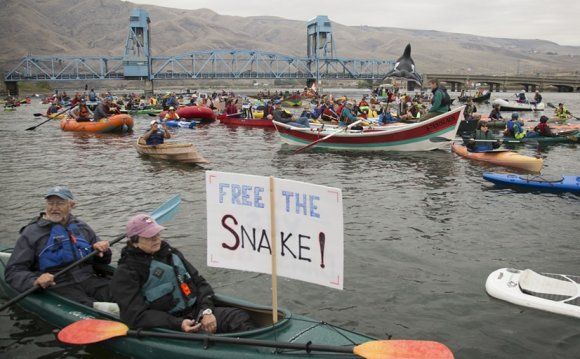 A Free the Snake flotilla