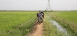 A farmer on their motorbike on lender between irrigated areas. When you look at the history, pylons carry hydroelectric energy through the Sélingué dam (picture: Mike Goldwater/GWI)