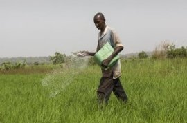 Seydou Haidara, 35, distributing chemical fertiliser on his 0.10 ha rice-field. He has another 0.75 ha land somewhere else and only works in agriculture considering that the earnings from both areas is enough to give the household (Photo: Mike Goldwater/GWI)